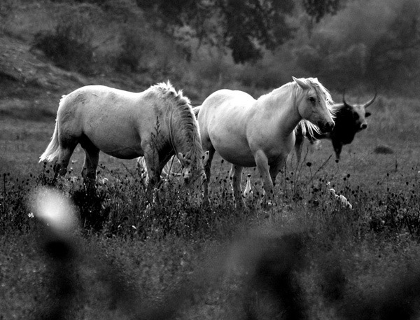 Beautiful Black And White Photography of Animals 25 Beautiful Animal Black
