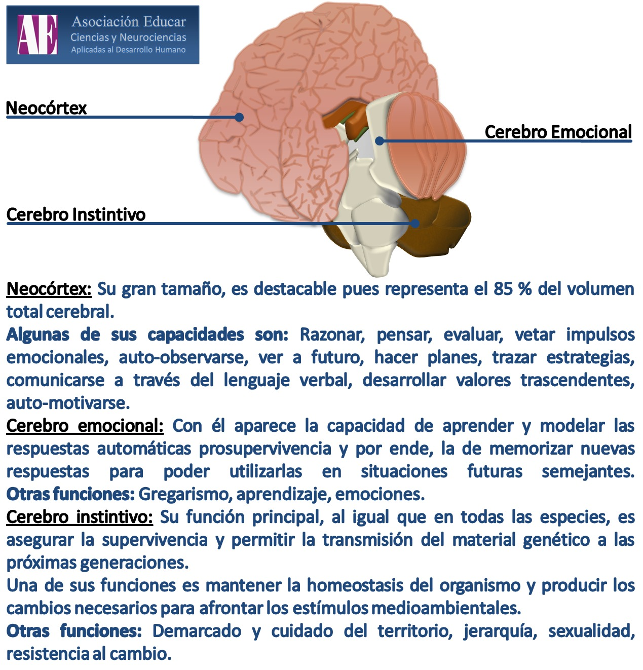 Neurociencias: Cerebro instintivo, emocional, neocortex
